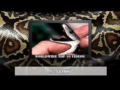 Top 10 Most Venomous Snakes - YouTube