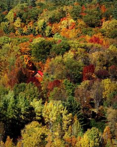 Going down the ski lift on Thanksgiving, I saw this little red roof amongst all the fall foliage.' Submitted by Amy O'Connor in Calabogie, Ont. Fall Images, Nature Images, Red Roof, Autumn Summer, Spring, Colorful Trees, Adventure Activities, Autumn Colours, Colors