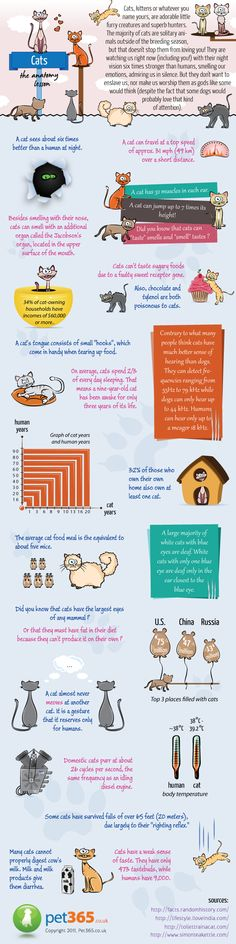 This fun infographic from Pet365 shows facts about the anatomy of a cat.  We know our feline friends are special and this info graphic illustrates some traits that set them apart. #cat infographics #cats