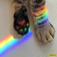 Rainbow cat and other cats Animals And Pets, Baby Animals, Funny Animals, Cute Animals, Animal Babies, Wild Animals, I Love Cats, Crazy Cats, Cat Paws