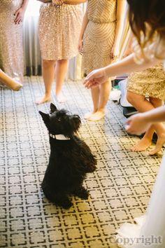 Image: j+j-43 in Jill + Joe's Wedding - latham hotel philadelphia