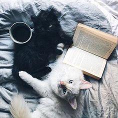 @kamplainnn ❃ cat kitten photography black and white coffee reading cozy