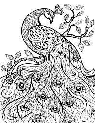 Výsledek obrázku pro coloring book for adults