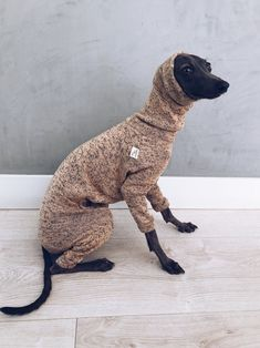 italian greyhound and whippet clothes / iggy clothes / Dog Sweater / ropa para galgo italiano y whippet/ LIGHT PEACH JUMPSUIT Italian Greyhound, Whippet, Doggies, Jumpsuits, Dog Cat, Dinosaur Stuffed Animal, Etsy, Clothes, Wish