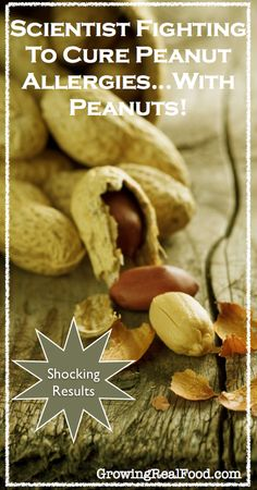 Scientist Fighting Peanut Allergies With Peanuts! | GrowingRealFood.com