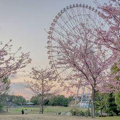 【juliushung2】さんのInstagramをピンしています。 《あれええ2月だけど桜が咲いた? まあ、桜かどうか分かへんですが、めっちゃ綺麗やん。 #桜 #日本 #葛西臨海公園 #東京 #花》