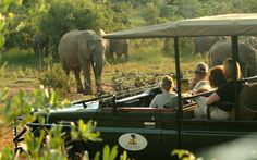 Makweti Safari Lodge is ideally positioned to explore the entire Welgevonden Game Reserve on the open safari vehicles accompanied by the professional game rangers. Game Lodge, Close Encounters, Game Reserve, Lodges, South Africa, Safari, Wildlife, Elephant, African