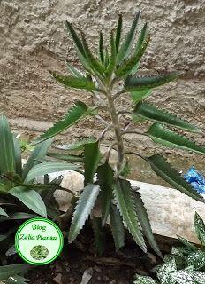plantas,cactos,suculentas,flores,jardim - Zélia Plantas