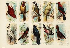 Original Antique Natural History Bird Print From by RarePostCards
