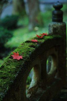 verde---➽viridi➽πράσινος➽green ➽verde➽grün➽綠➽أخضر ➽зеленый Nature Sauvage, Moss Garden, Ferns Garden, Garden Stones, Autumn Garden, In Natura, Japanese Culture, Wabi Sabi, Belle Photo