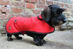 Dachshund Dog Coat from notonthehighstreet.com