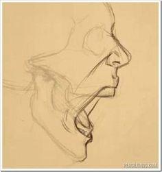 Anatomy Drawing Tutorial drawing a screaming mouth adding skin Anatomy Sketches, Anatomy Art, Art Drawings Sketches, Skin Anatomy, Hard Drawings, Eye Drawings, Zentangle Drawings, Pencil Art Drawings, Sketch Art