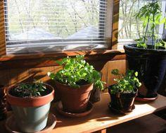 Hay que mantener las plantas saludables y una de las mejores maneras es fertilizándolas. ¡Aquí hay algunos fertilizantes 100% naturales que puedes usar!
