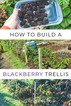How to build a Black
