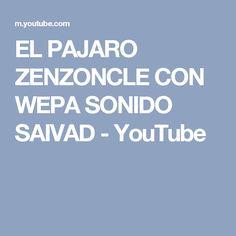 EL PAJARO ZENZONCLE CON WEPA SONIDO SAIVAD - YouTube