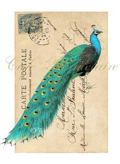 Peacock postcard. Mail Art!