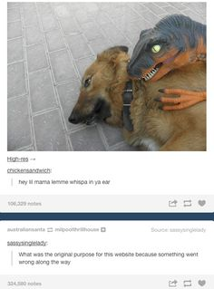 Seriously what was the purpose of this?! LOL Tumblr Stuff, Funny Tumblr Posts, Jurrassic Park, Funny Animals, Cute Animals, Jurassic, Best Of Tumblr, Lol, Laughing So Hard