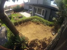 Yep, that Palm Tree Stump is gone burger! Tree Stump, Grinding, Auckland, Palm Trees, Brows, Plants, Life, Palm Plants, Eyebrows