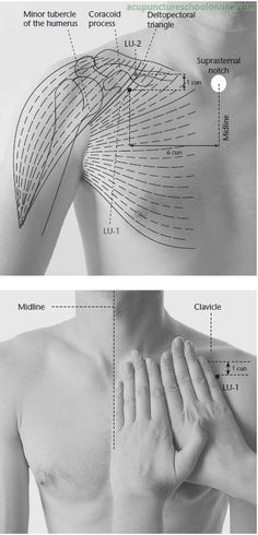 LU-1 Central Residence ZHONGFU - Acupuncture Points -1