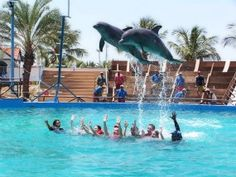 """In tourist-driven """"swim-with"""" programs, dolphins are denied everything important to them. They have distinct personalities and can think about the future. Scientists at Emory U found dolphins' cognitive capacity is second only to humans. The scientific research suggests that dolphins are 'non-human persons' who qualify for moral understanding as individuals. In the wild, dolphins swim together in family pods up to 100 miles a day.   In captivity, they are kept in small pools or polluted sea…"""