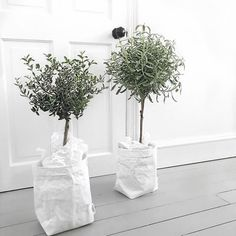 Uashmama paper bags via Indoor Trees, Indoor Plants, Cactus Plante, Olive Tree, Green Plants, Houseplants, Decoration, Planting Flowers, Greenery