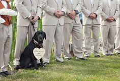 "Dog At Wedding Ceremony ""I've kissed the bride"""
