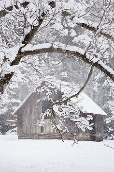 Foggy Winter Morning - Rob Travis