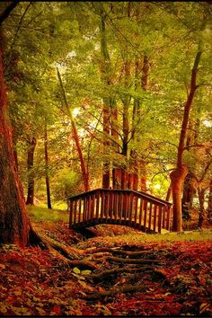 Fall! I want a red bridge like this.