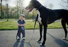 Baby & Great Dane