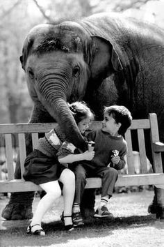 Beautiful moments in life : elephant love Animals For Kids, Animals And Pets, Baby Animals, Cute Animals, Beautiful Creatures, Animals Beautiful, Elephants Never Forget, Elephant Love, Elephant Walk