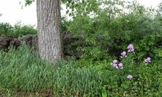 After The Rain - Stone Fence & Spring Greenery - Gallery - Jacqueline Crawley   pmp-art.com