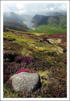 The Mourne Mountains of Ireland -- replete with purple heather and mist