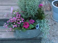 Blommor i kärl
