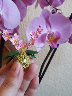 how to make a miniature orchid