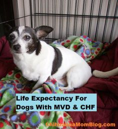 Home Remedies For Congestive Heart Failure In Dogs