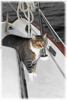 Cruising with a cat - things to consider to keep your cat happy and safe on a sailboat via the Frugal Mariner.