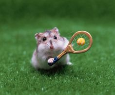 Hamster Playing Tennis Stock Photo 3004-002063