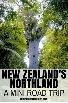 New Zealand's Northland: A Mini Road Trip - The Trusted Traveller