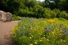 Native Plant Garden | NYBG