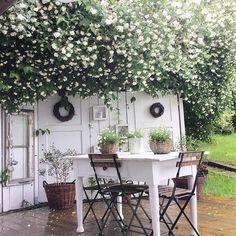 ♡༻ Outdoor Rooms, Outdoor Gardens, Outdoor Living, Outdoor Decor, Rustic Outdoor, Moon Garden, Dream Garden, Jardin Style Shabby Chic, Romantic Backyard