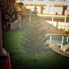 #InstagramELE | #verde | El verde es el otro color de esta época quizá por los pinos - Foto de @laurajc_99