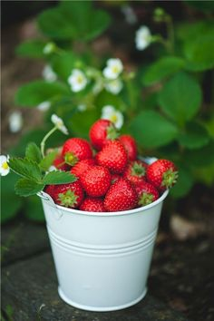 Pick Your Own: The Farms to Visit