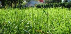 Spring lawn care tips & tricks. Fall Lawn Care, Lawn Care Tips, Types Of Grass, Growing Grass, Pergola Pictures, Lawn Sprinklers, Lawn Maintenance, Yard Care, Garden Equipment