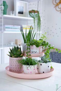 plateau de pâtisserie avec plantes