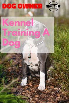 Kennel training is useful with youthful dogs and also older puppies with stress and anxiety issues. The greatest goal regarding crate exercising is trying to keep your dog away from harms approach. Kennel Training A Dog, Crate Training, Dog Training Tips, Stress And Anxiety, Dog Owners, Stuff To Do, Pitbulls, Puppies, Check