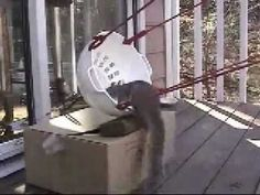 A squirrel gets launched out of a pot. *EDIT* This is for all you Peta Tards, People who have no life, People who have no life and try to bash on rednecks an...
