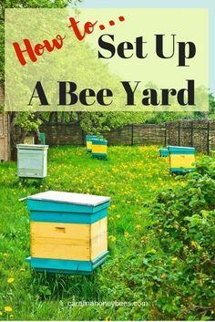 to Set Up A Bee Yard How to Set Up A Bee yard. Things to consider when you are building an apiary.How to Set Up A Bee yard. Things to consider when you are building an apiary. How To Start Beekeeping, Beekeeping For Beginners, Honey Bee Hives, Honey Bees, Bee Hive Plans, Raising Bees, Buzz Bee, Bee Boxes, Bee Farm