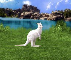 kangaroo by batcula, via Flickr love him!