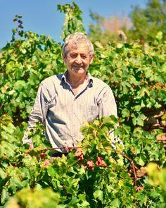 """Otra jornada de vendimia en la #RibeiraSacra hoy me toco con """"El Panameño"""" 30 años emigrado en Panamá y ahora está en casa con sus amigos disfrutando el tiempo en su viña  . . . #Galicia #vendimia #wine #vino #winelovers #people"""