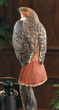 Red-tailed Hawk Perched on a Log - Hand Painted Bird